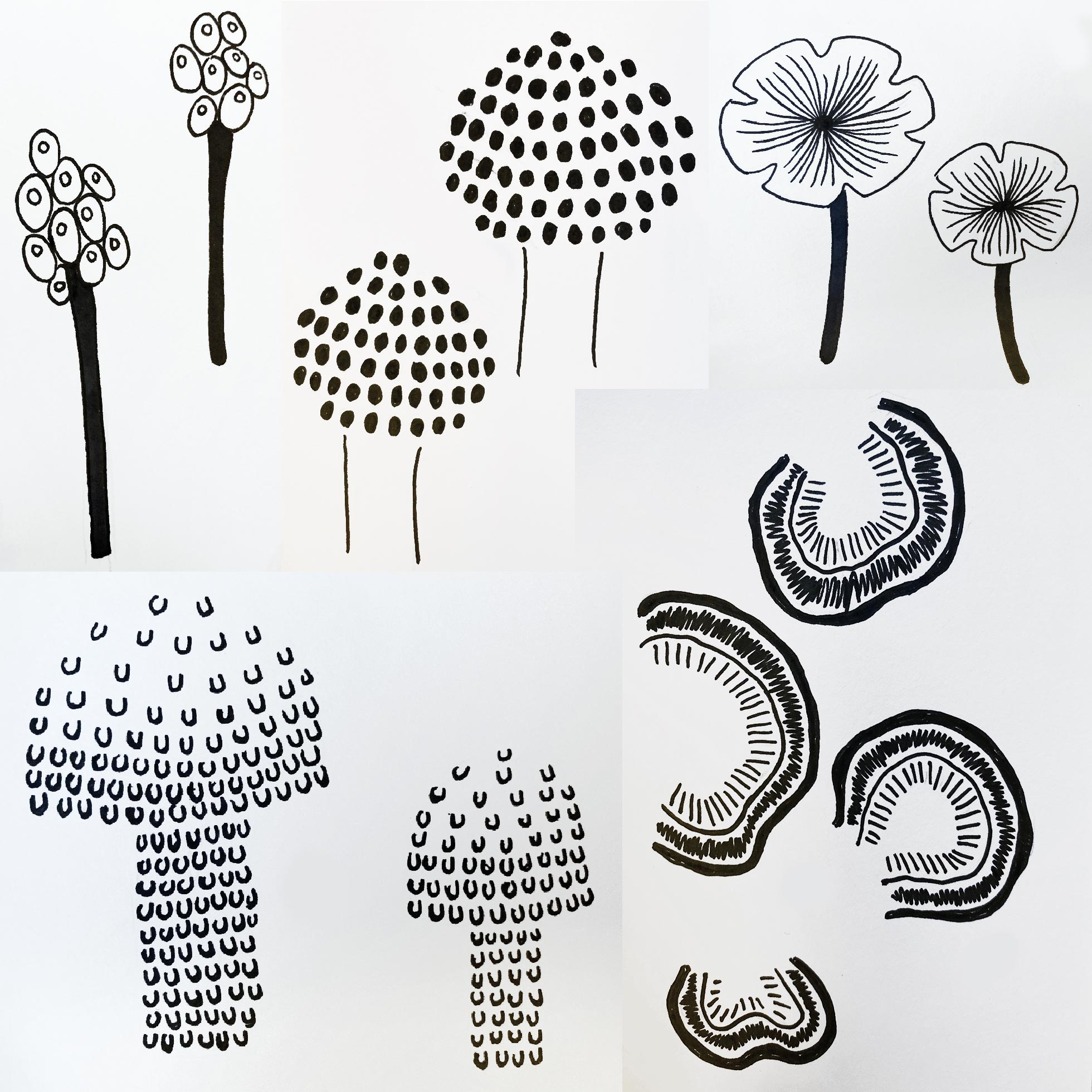 Sketches of Mushrooms - Pattern Designs in Progress